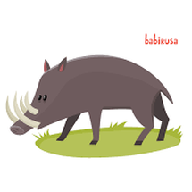 babyrusa